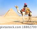 Camel at Giza pyramides, Cairo, Egypt. 18862700