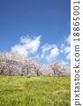 Cherry Blossoms 18865001