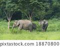 ช้าง,ป่า,สัตว์ป่า 18870800