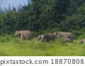 ช้าง,ป่า,สัตว์ป่า 18870808