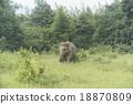 ช้าง,ป่า,สัตว์ป่า 18870809