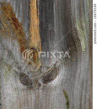 bizarre alien face of knots on textured wood 18879189