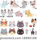 貓 貓咪 小貓 18880188