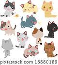 毛孩 貓 貓咪 18880189