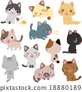 cat, pussy, set 18880189