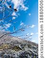 樹木 樹 樹棲 18880606