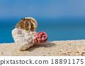 寄居蟹 留白 海灘 18891175