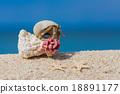 寄居蟹 留白 海灘 18891177