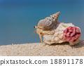 寄居蟹 留白 海灘 18891178