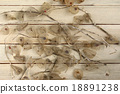 Dried Fruits of the Cape Gooseberry 18891238