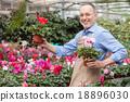 園藝 花朵 花 18896030