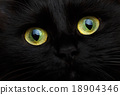 Cute muzzle of a black cat close up 18904346