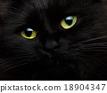 Cute muzzle of a black cat close up 18904347