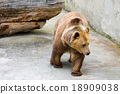 Brown bear in the zoo 18909038