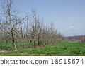 Spring of orchard 18915674