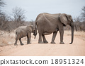 animal, elephant, nature 18951324