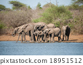 A herd of African elephants  18951512