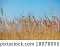backdrop, background, grass 18978000