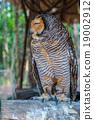 Owl 19002912