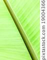 banana leaf 19004366