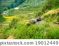 Two buffalo lying in a meadow in the mountains 19012449