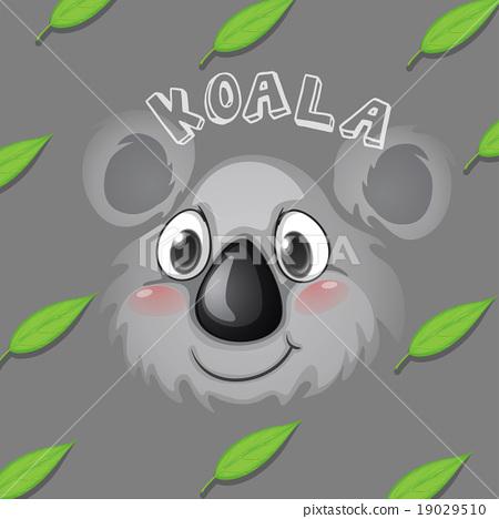 Koala face and gum leaves 19029510