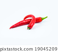 red hot chili pepper isolated on a white  19045209