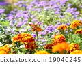 ดอกไม้,แปลงดอกไม้,ฤดูใบไม้ร่วง 19046245