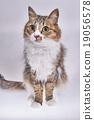 고양이 나짱 19056578