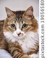고양이 나짱 19056580