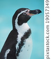 Yoko Humboldt Penguin 19057349