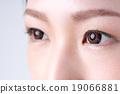 ม่านตา,ตา,ผู้หญิง 19066881