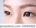 ม่านตา,ตา,ผู้หญิง 19066882