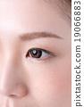 瞳孔 19066883