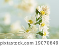 Breath flowers in a glass jar 19070649