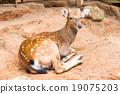 deer 19075203