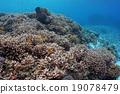 热带鱼 咸水鱼 海水鱼 19078479