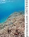 热带鱼 咸水鱼 海水鱼 19078480