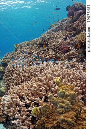 热带鱼 咸水鱼 海水鱼 19078481