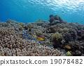 Coral和DebassスメDie 19078482