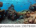 Coral和DebassスメDie 19078484