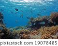 Coral和DebassスメDie 19078485