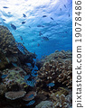 Coral和DebassスメDie 19078486