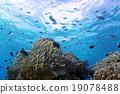 Coral和DebassスメDie 19078488