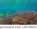 珊瑚 分叉珊瑚 热带鱼 19078662