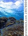 珊瑚 分叉珊瑚 热带鱼 19078664