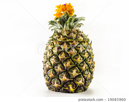 Pineapple 19083960