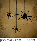spiders 19090493