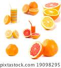 citrus collection 19098295