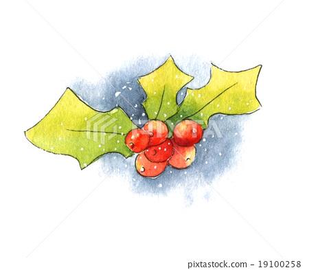 Holly Berries 19100258